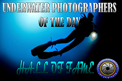 "UWPhotographers of the day ""HALL OF FAME"""