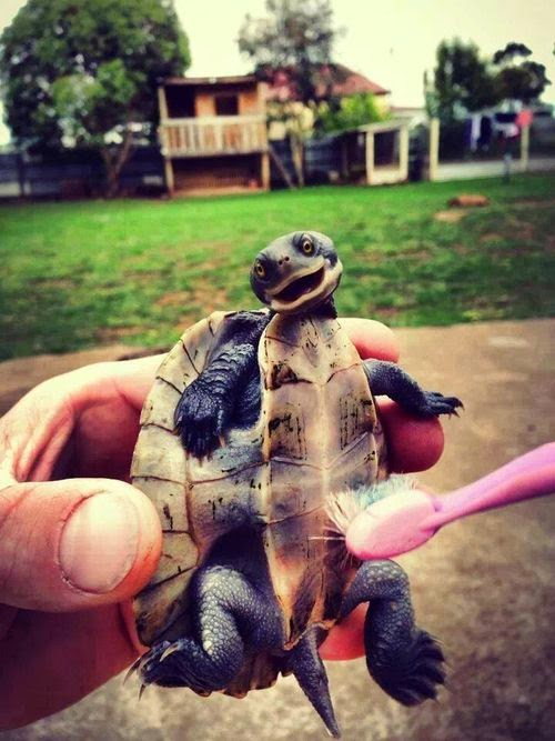 Baby Turtle Pictures