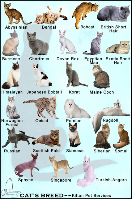 Cat's Breed