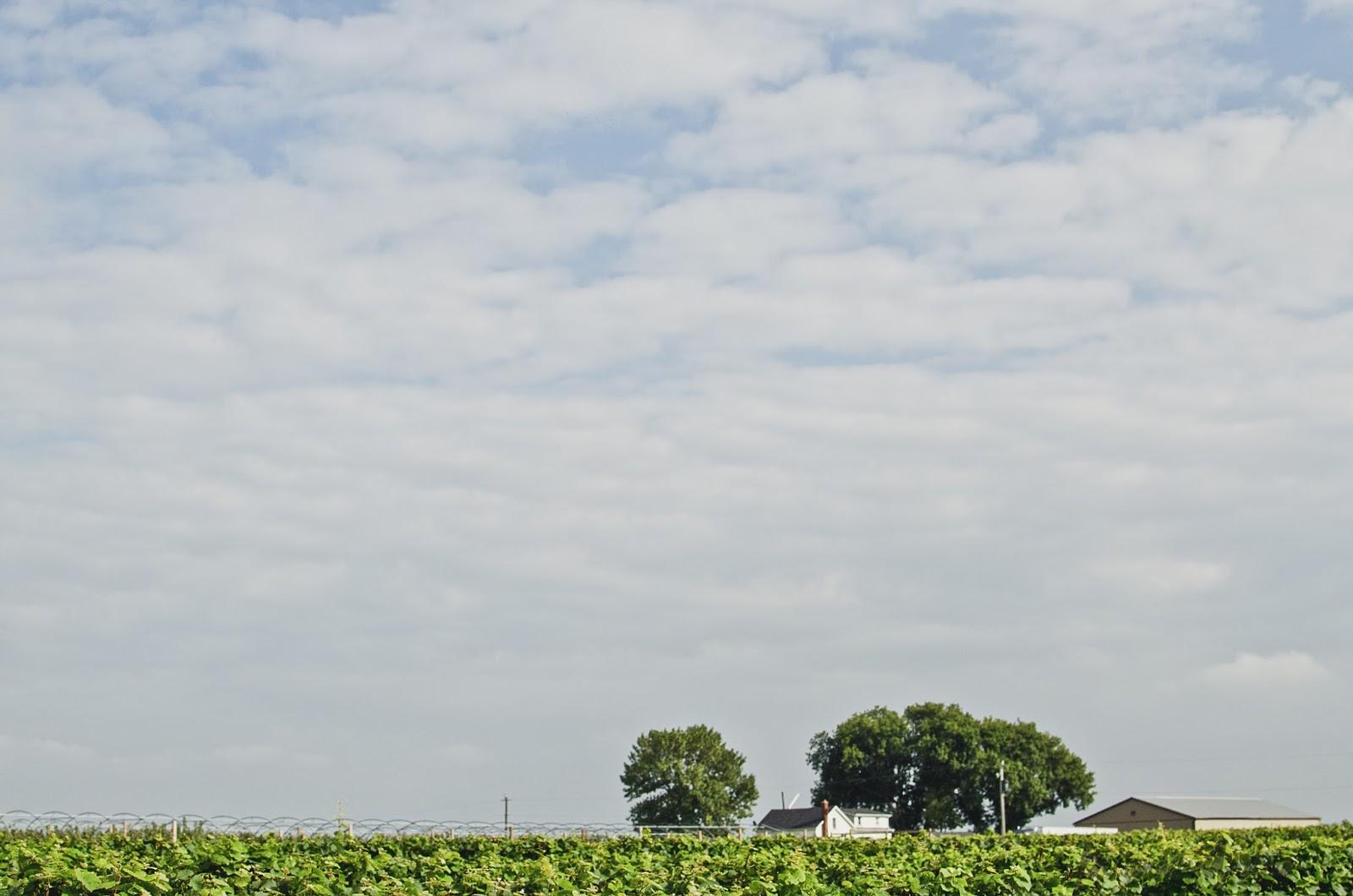 A Visit to Wine Country | personallyandrea.com