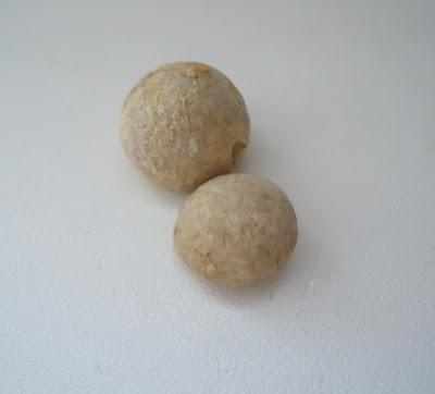 Two Fossils Sea Urchin Echinoid