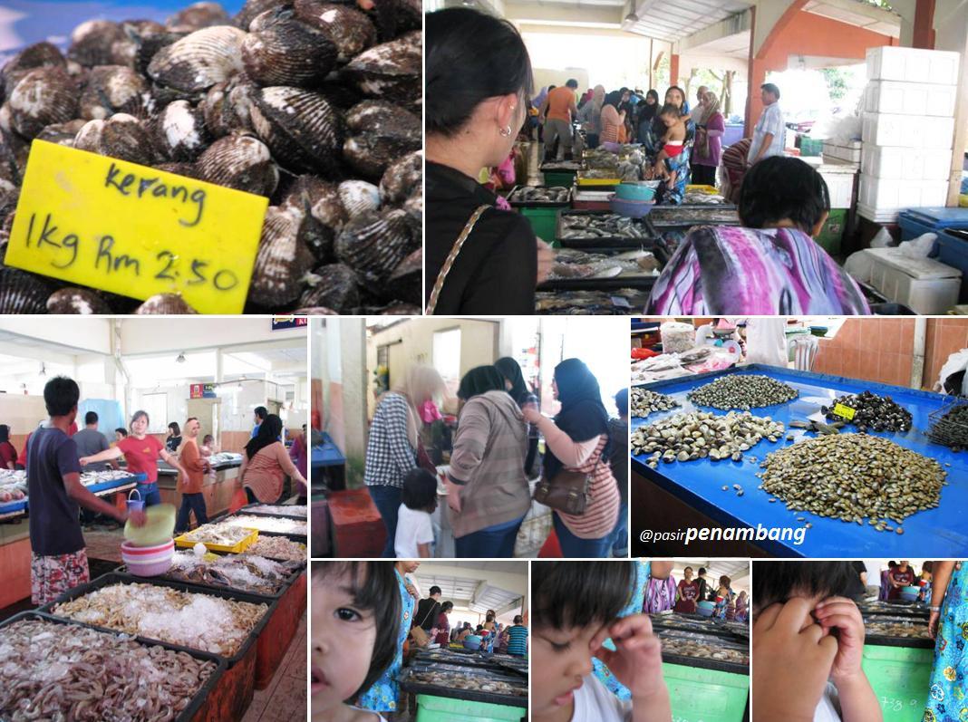 Kucing Untuk Dijual Murah Di Selangor Kucing Untuk Dijual