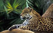 Dentro de los animales podemos encontrar cinco grandes grupos