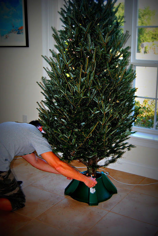 A Pair of Kings: Oh, Christmas Tree