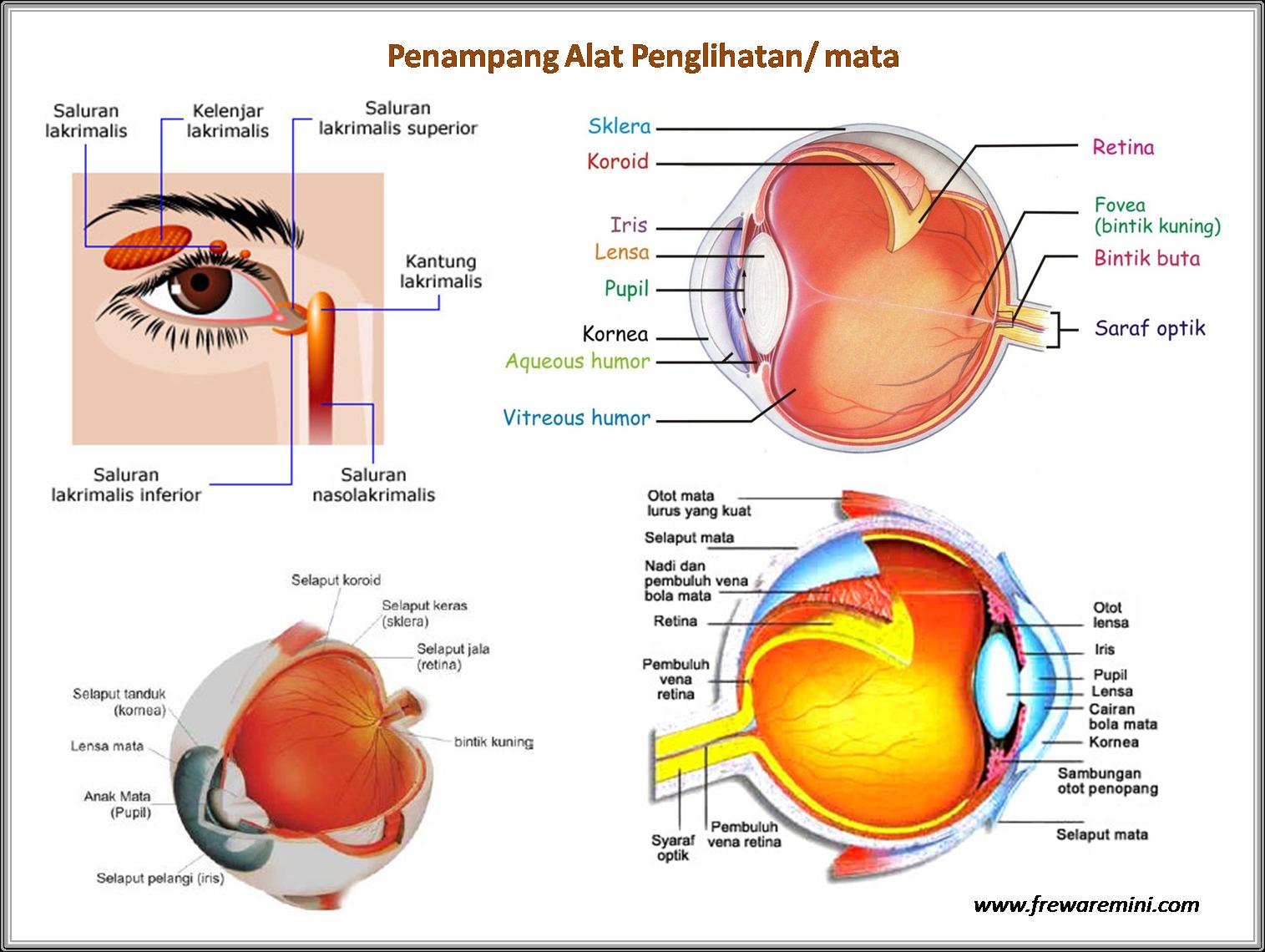 Rpp Bahasa Indonesia Kelas Rpp Kelas Pkn Rpp Smk Bahasa Inggris Kelas X Ktsp Silabus Dan Rpp