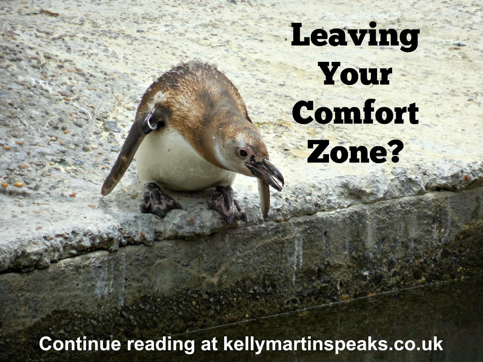 leave comfort zone taking leap penguin