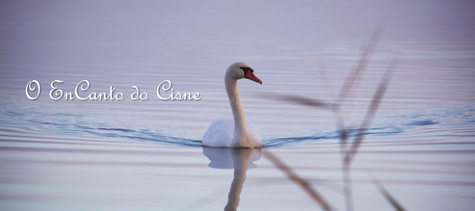 O EnCanto do Cisne