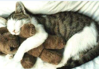 funny picture: cat with a doll
