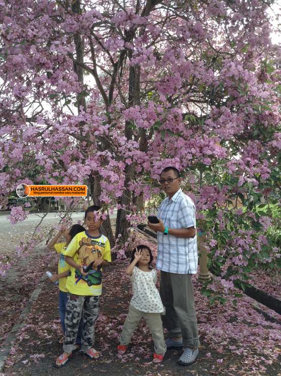 Keunikan Parit Buntar - Bunga 'Sakura'