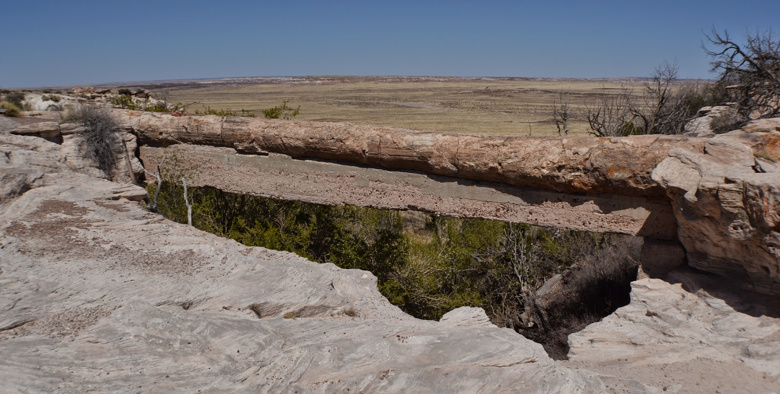 petrified forest natl pk dating The petrified forest national park is a huge area containing the mineralized & colorful wood fossils, badlands, petroglyphs & other sites of note photos & videos.