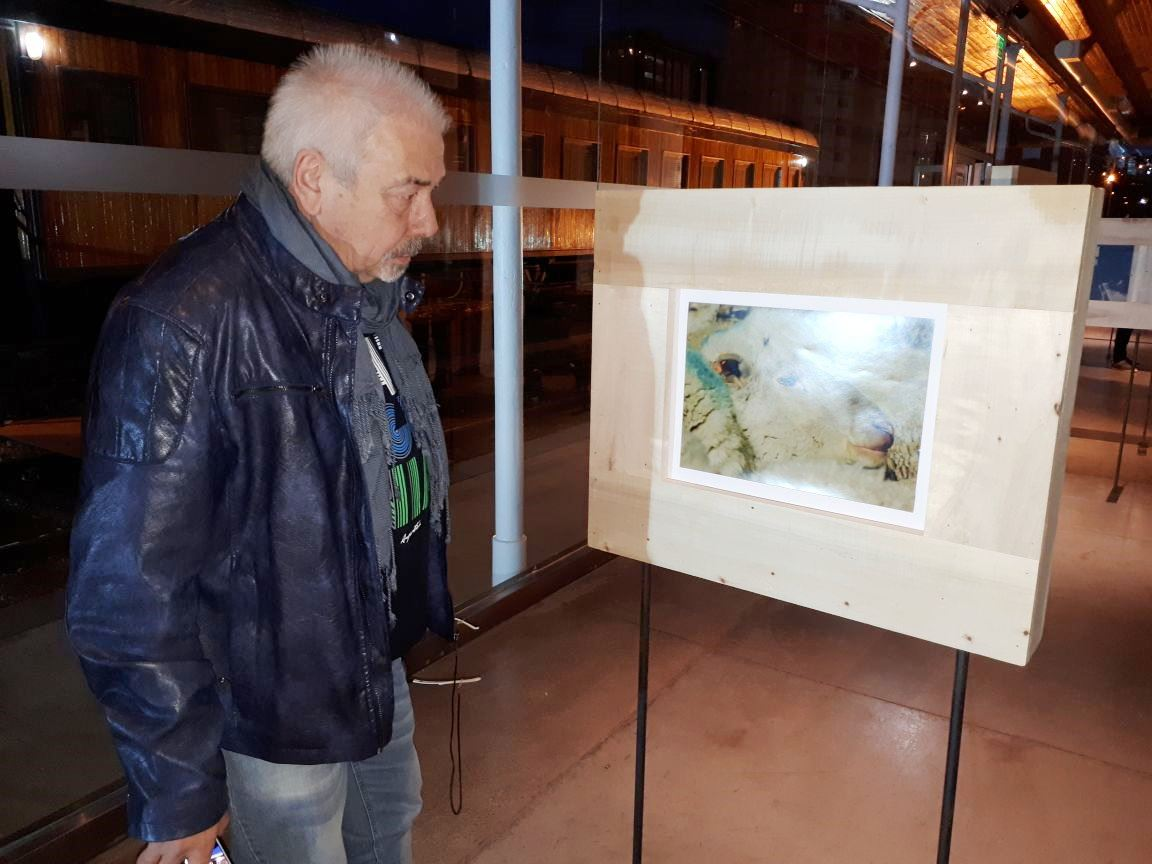 """Comodoro: se inauguró la muestra """"BEEP BEEP Seguí al Rebaño ..."""