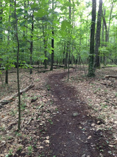Binghamton Area Trail Runners - Confluence Running - South Mountain