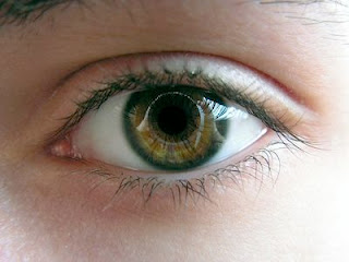 Can You Use Saline Solution In Dogs Eyes