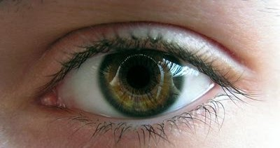 Can I Use Saline Eye Drops On My Dog