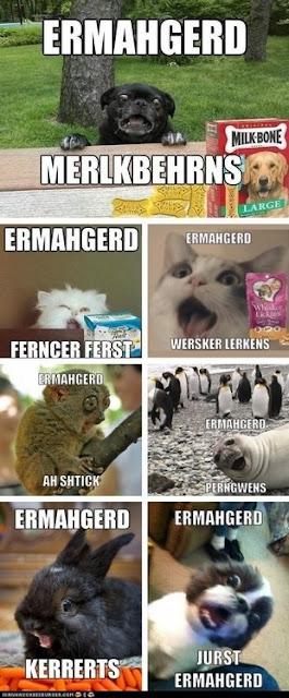 Ermahgerd www.hungergameslessons.com