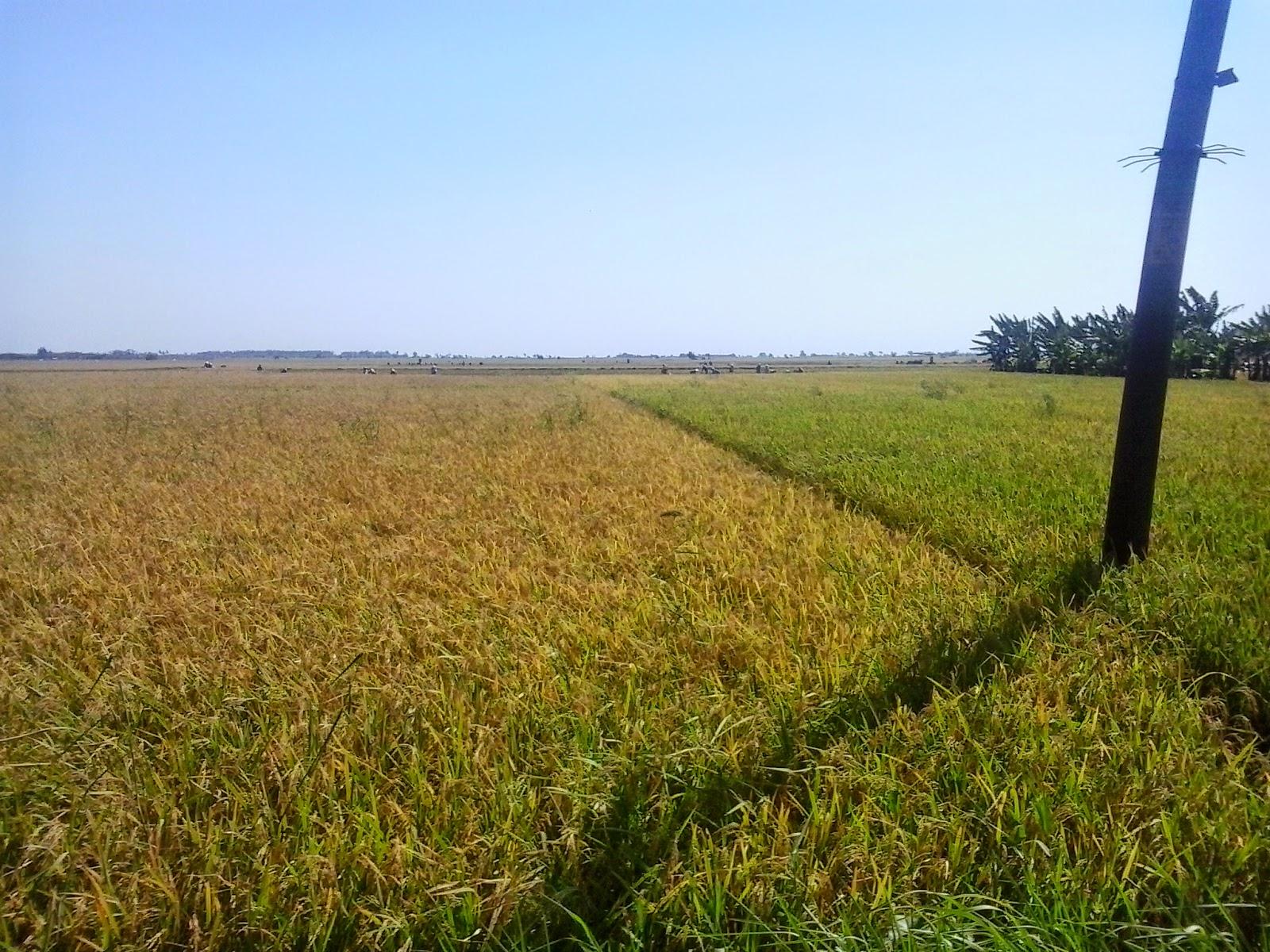 Risqi Safitri Apa Sih Pertanian Itu