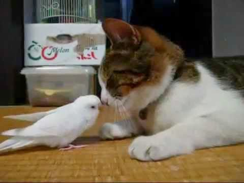 Apisteyto-papagalos-3ypnaei-ton-filo-tou-to-gato