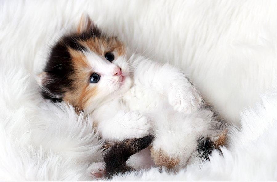 Gambar Kucing Cute godean.web.id