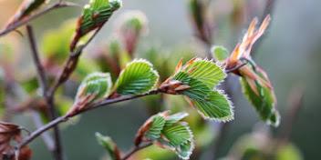 PLANT EN FÆRDIG-HÆK
