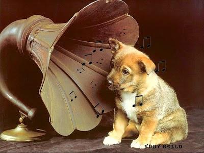 El Efecto de la Música En tu Perro...