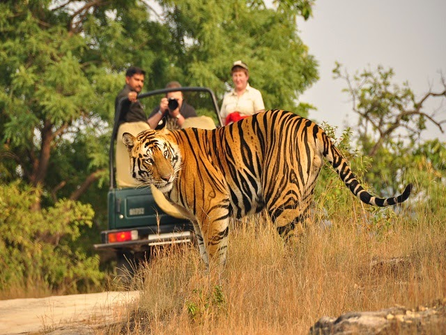 Bandhavgarh National Park - A delight for adventure lovers and wildlife