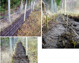 planting willow
