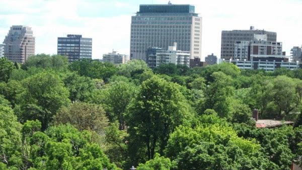 Pohon Pelindung Kota