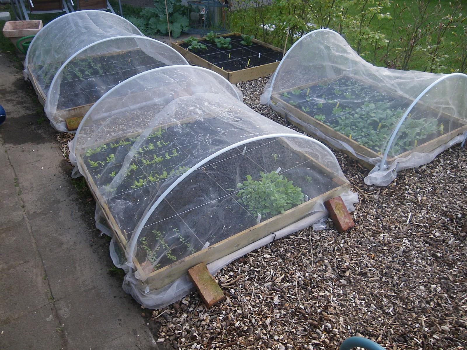 Vierkante Meter Tuin : Vierkante meter tuin voor basisschool de kasteeltuin in roermond
