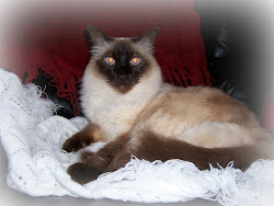 My Vintage Cat