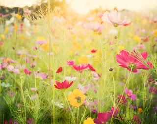 Rosas y amarillas que acarician Fotos de flores silvestres