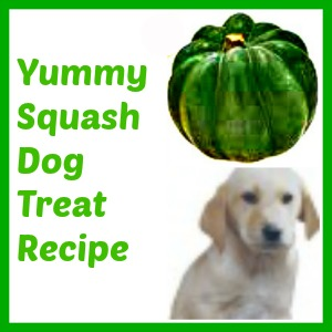 squash dog treat recipe
