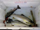 Høstfiske på Norsjø