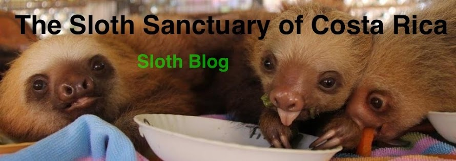 The Sloth Sanctuary of Costa Rica - Sloth Blog