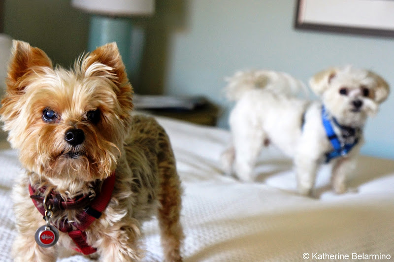 Dog Friendly Loews Coronado Bay