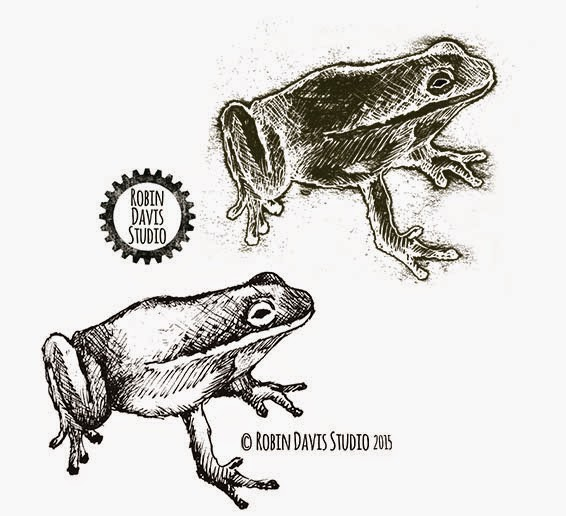 Ink drawing Frog - Robin Davis Studio
