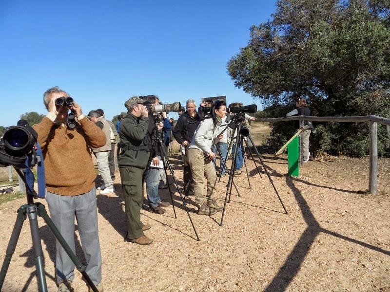 Curso Iniciación Ornitología 2012 Organiza SEO-Sevilla. Excursión a Doñana