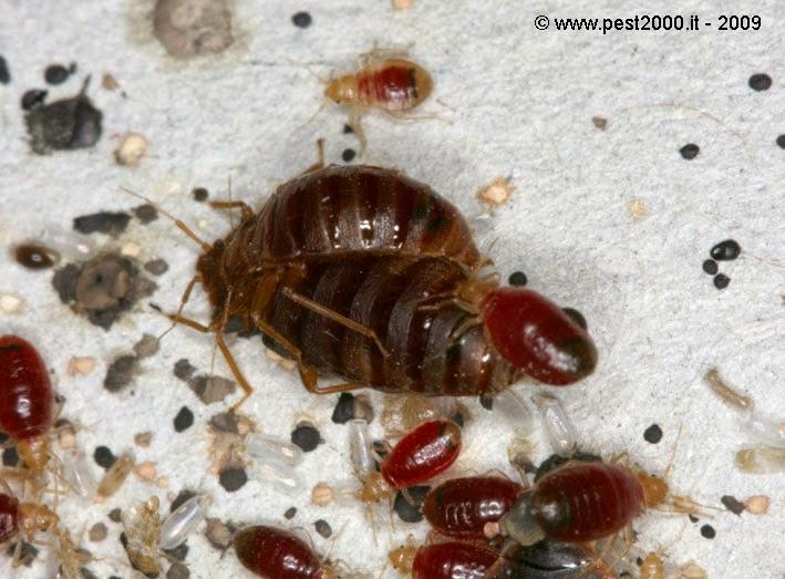 surot in dubai bedbugs my worst nightmare
