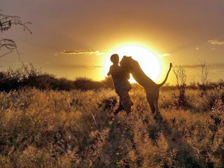 Sirga the Lioness, Lion, Valentin Gruener, Mikkel Legarth, Modisa Wildlife Project, human bond with lions