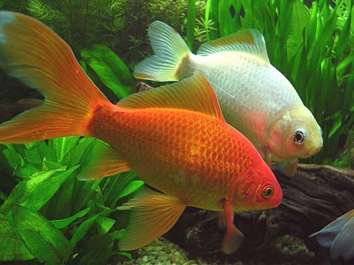 Pescaitos tipos de peces - Peces tropicales fotos ...