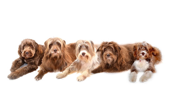Welcome to the Blog of Rosie Ison & her Scruffy Mutts.