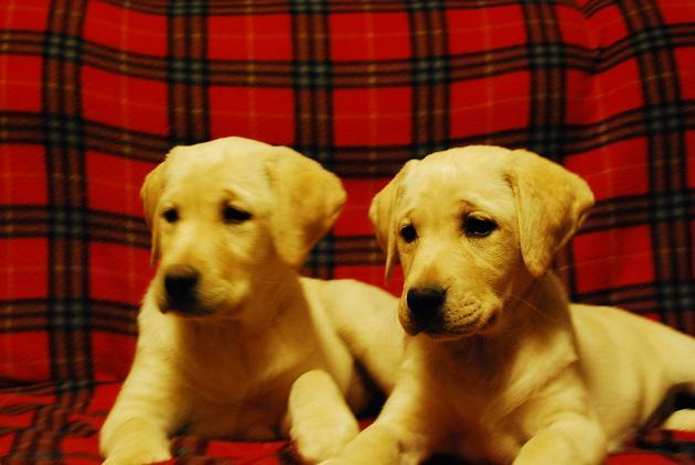 Kristi's puppies