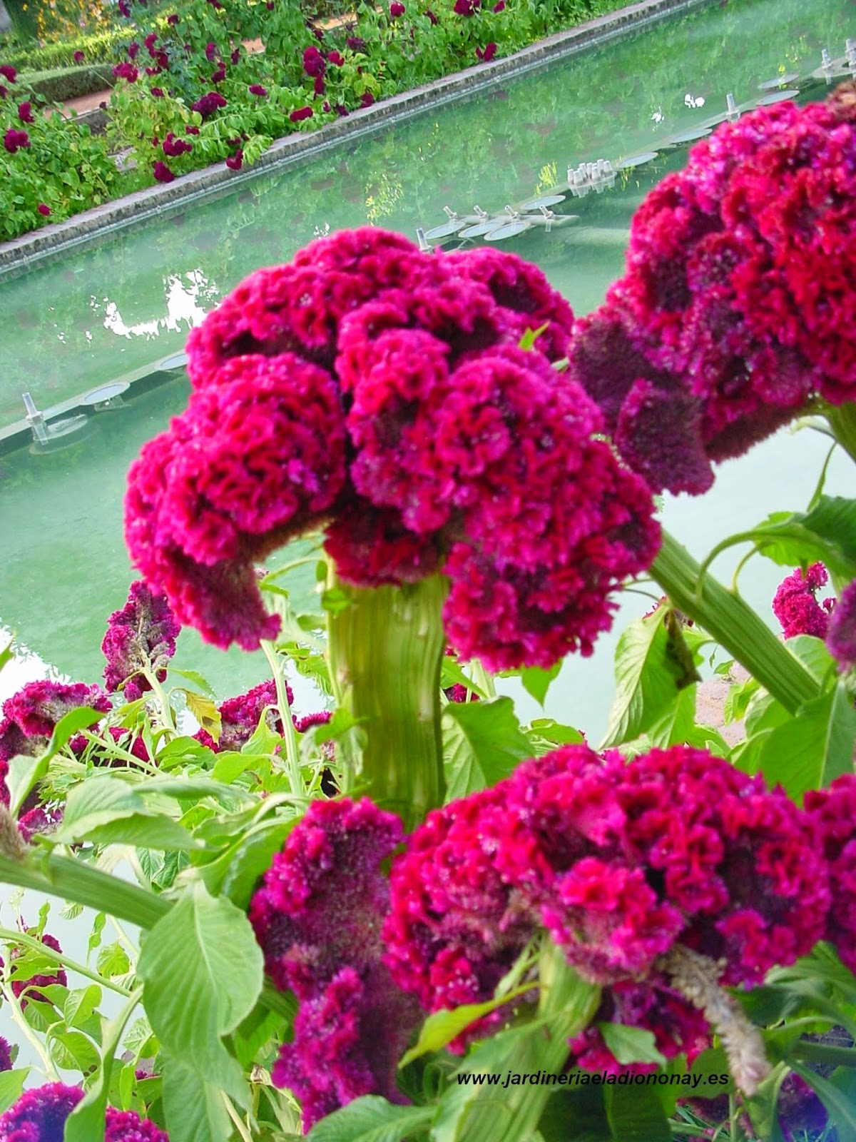 Jardineria eladio nonay plantas repetidas jardiner a - Jardineria eladio nonay ...