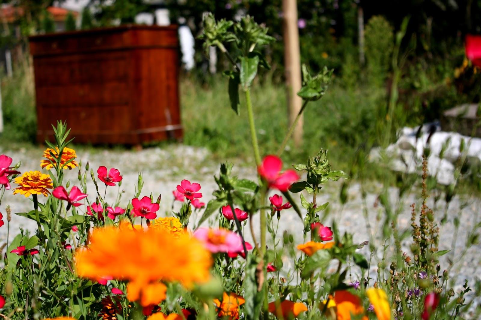 bazarette planter un bouquet de fleurs. Black Bedroom Furniture Sets. Home Design Ideas