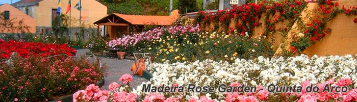 Madeira Rose Garden