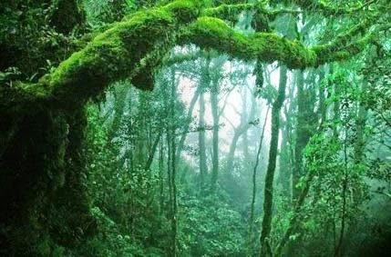 Macam macam hutan menurut fungsinya