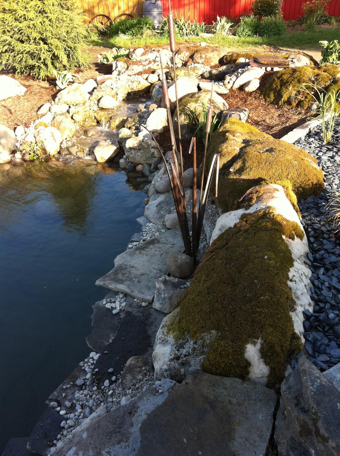 Fish Dying In Backyard Pond : Meditation Garden and Fish Pond  Summerhill Still Life