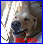 BIG BEN il gigante buono