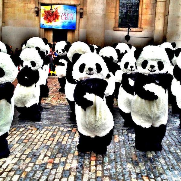 Tai Chi Pandas