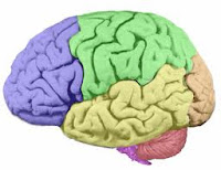Tes IQ Dengan Media Warna