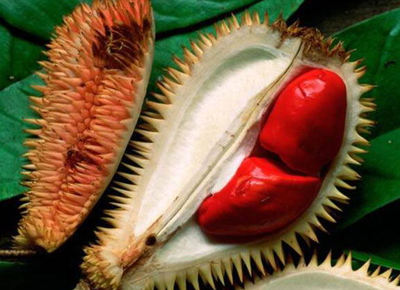Durian Merah, Yes It Is Red Durians, Weird but Kelihatan Lazat